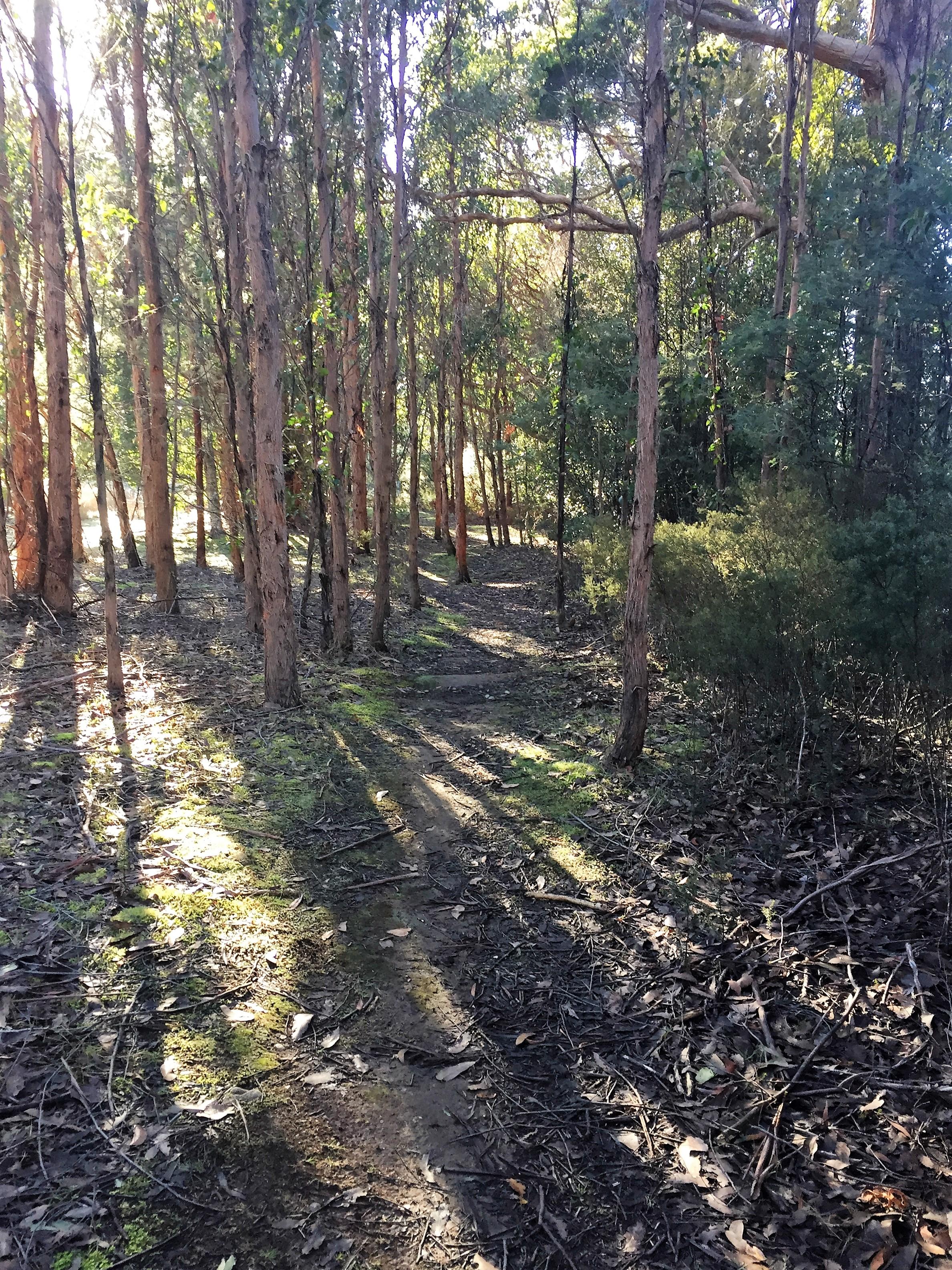 Walking in the bush, Marriot Falls