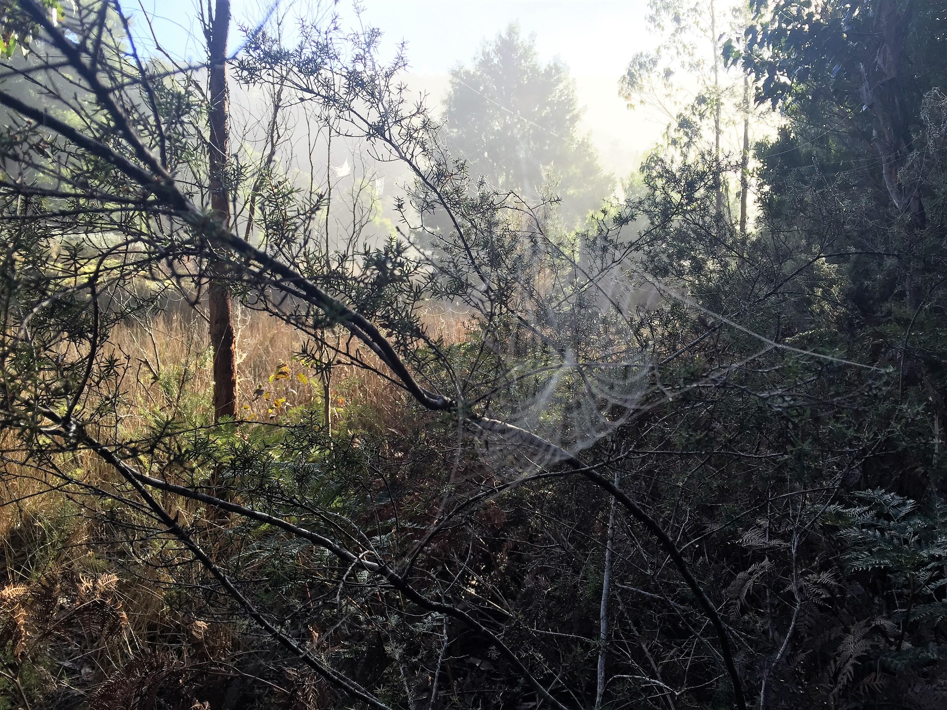 Abundance of cob webs, Marriot Falls