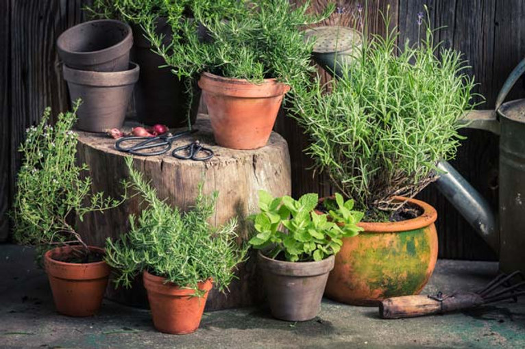 herbs-growing-in-pots.jpg