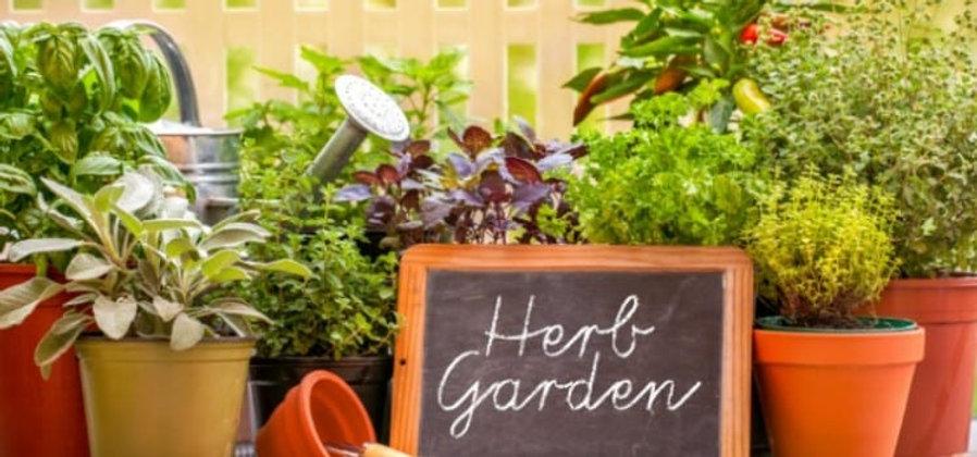 Herb-Garden-748x350.jpg