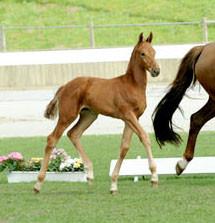 Tantoni Springsteen foal inspection
