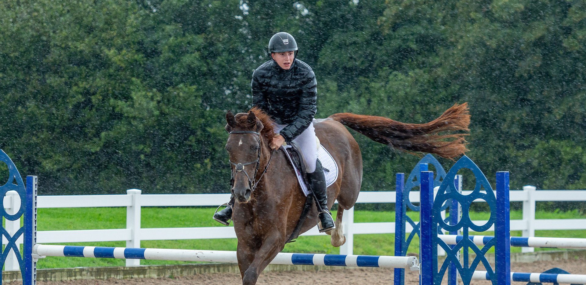 Tantoni Renaissance Chard Equestrian