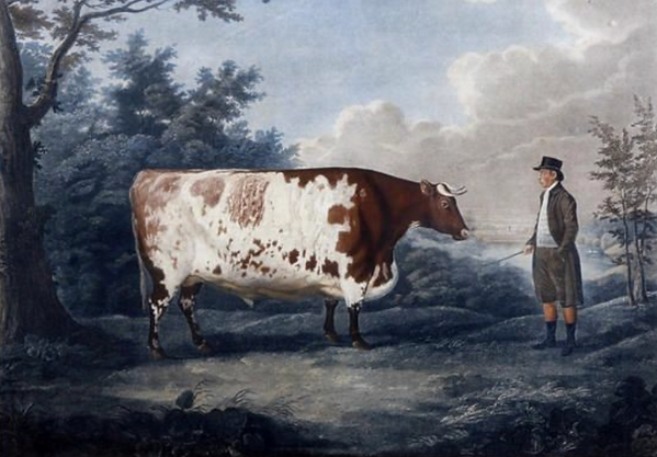 famous Durham ox.png