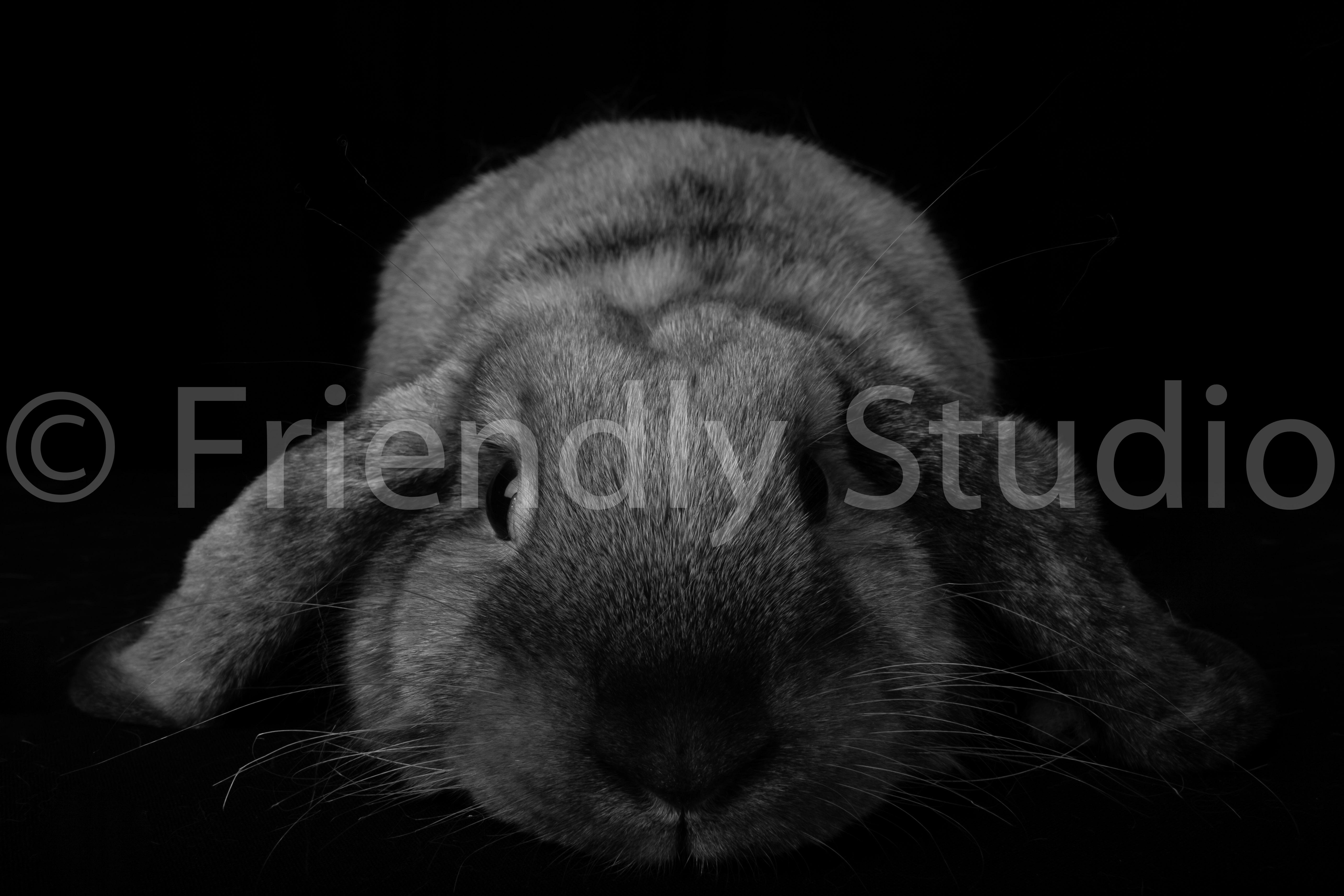 Photographe Pro Rongeurs NAC