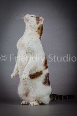 shooting photo animal de compagnie