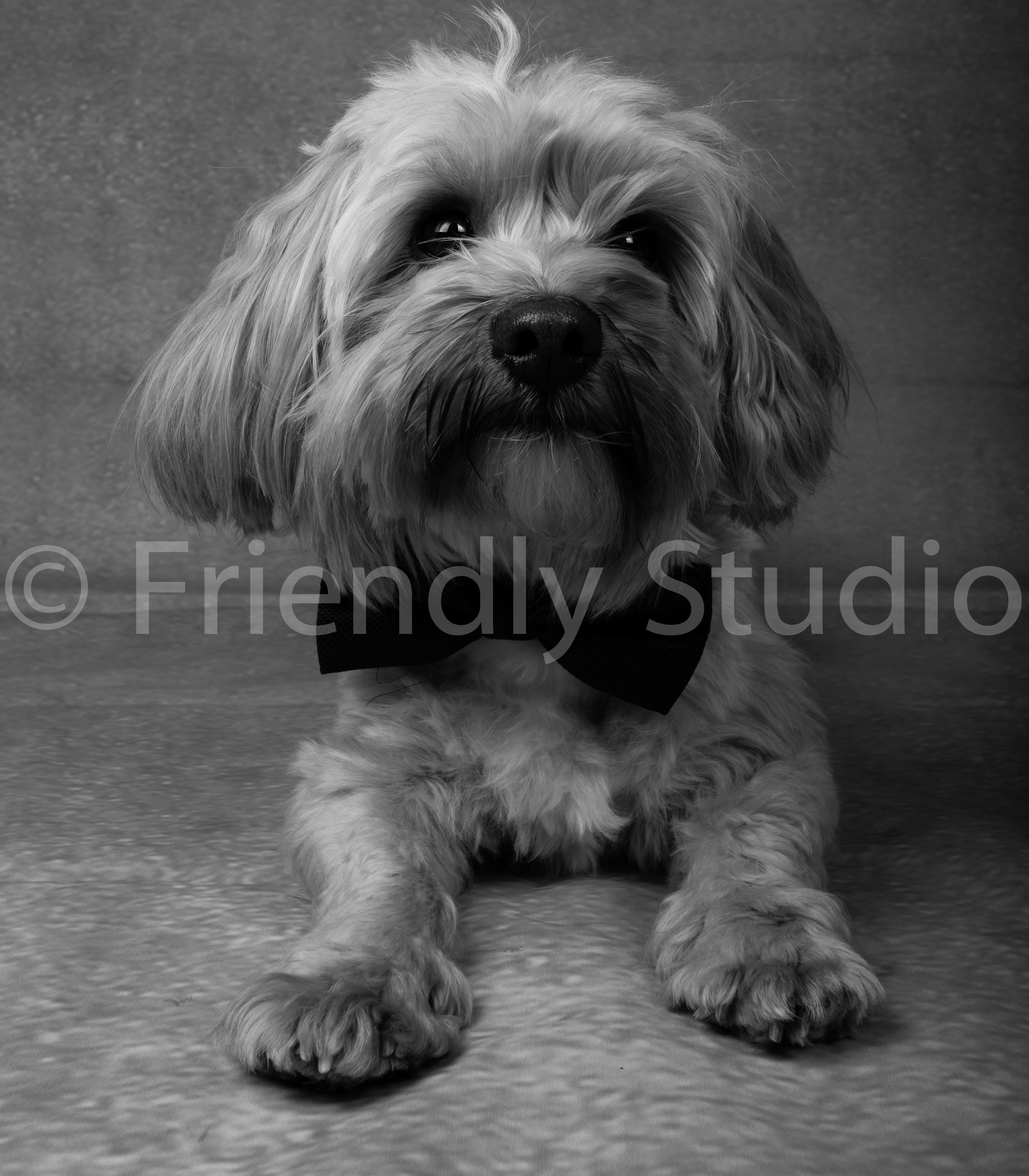 Le Photographe de chiens et chiots