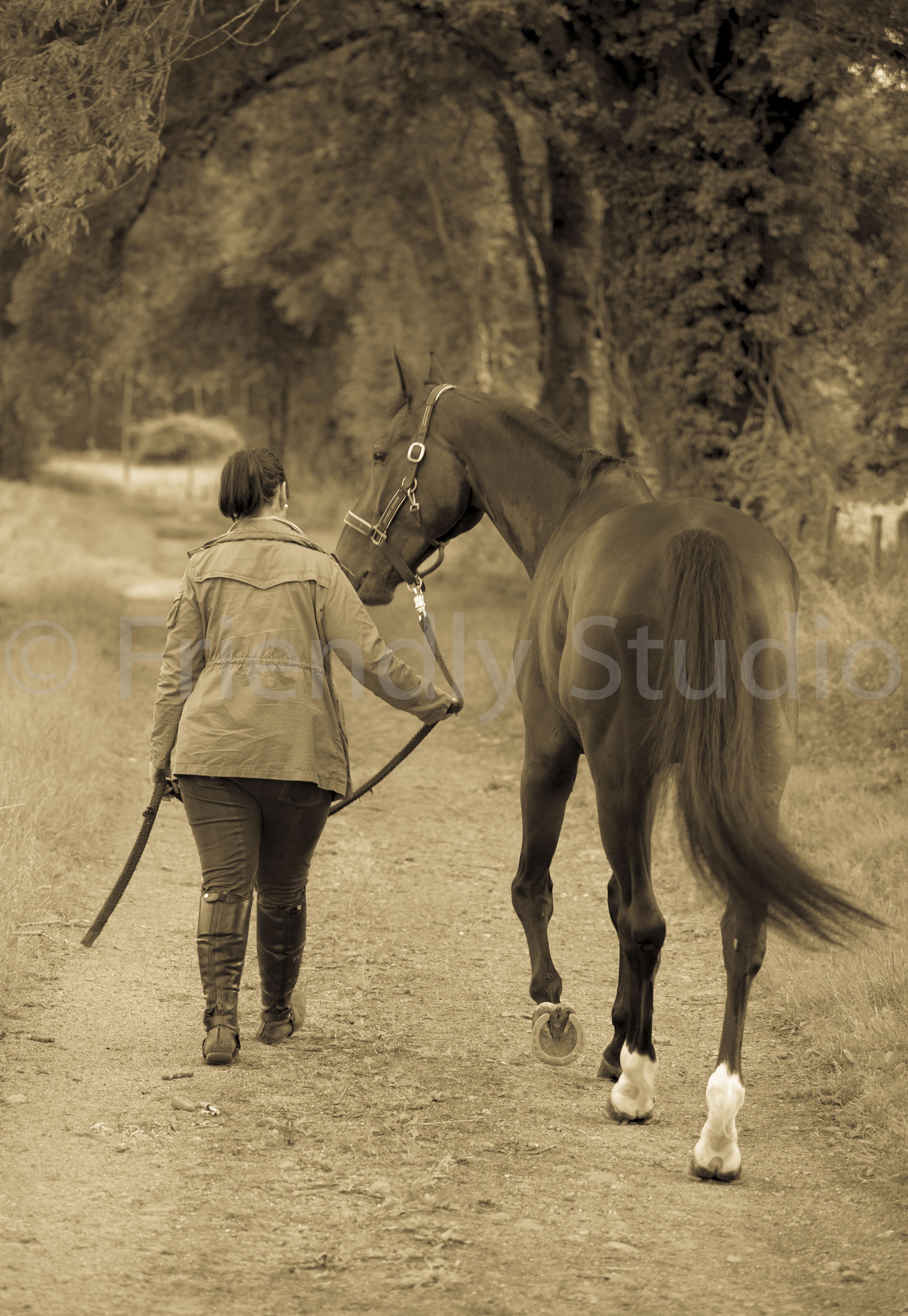 Le Photographe de votre cheval