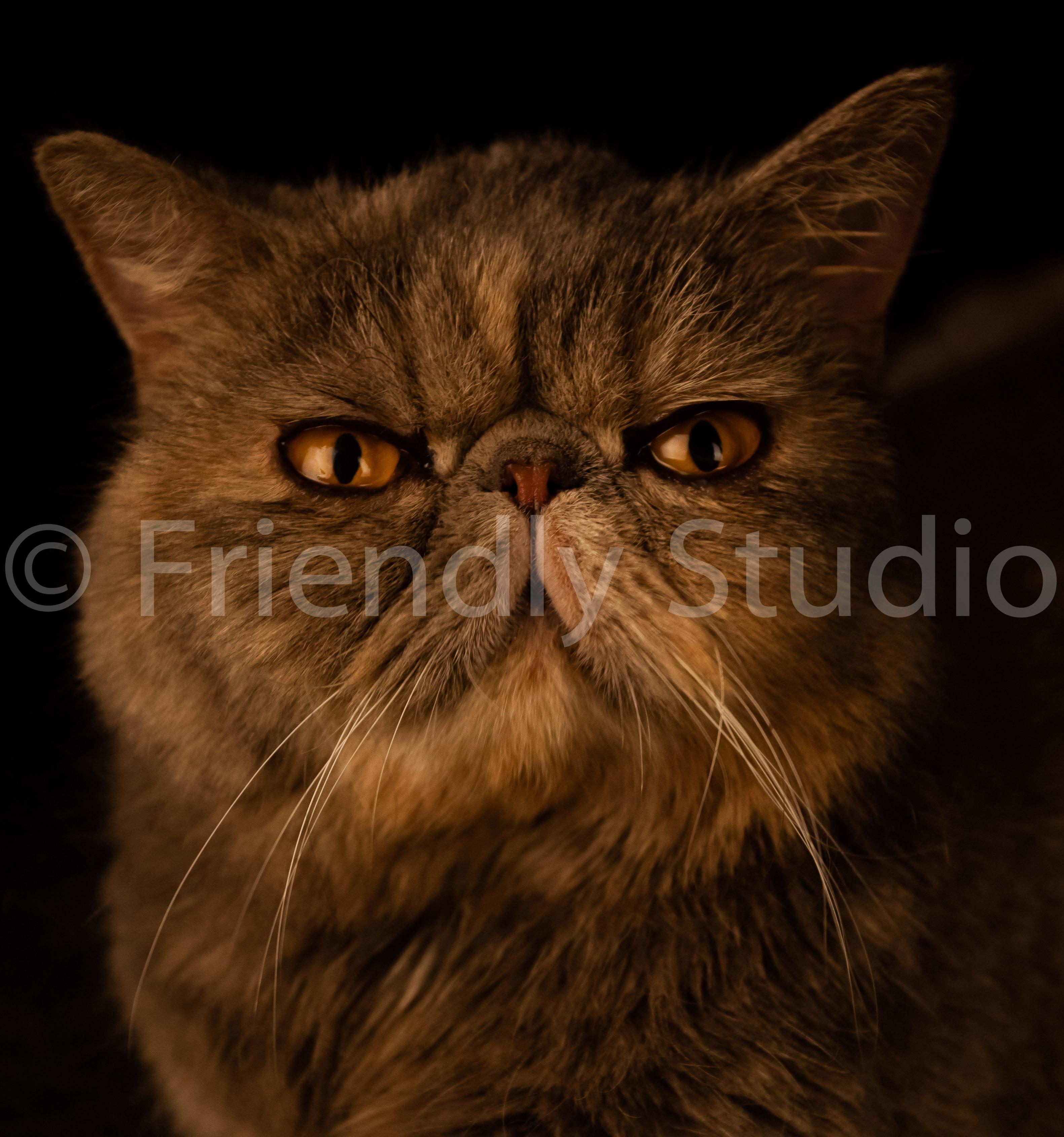 Le Photographe de chats et chatons