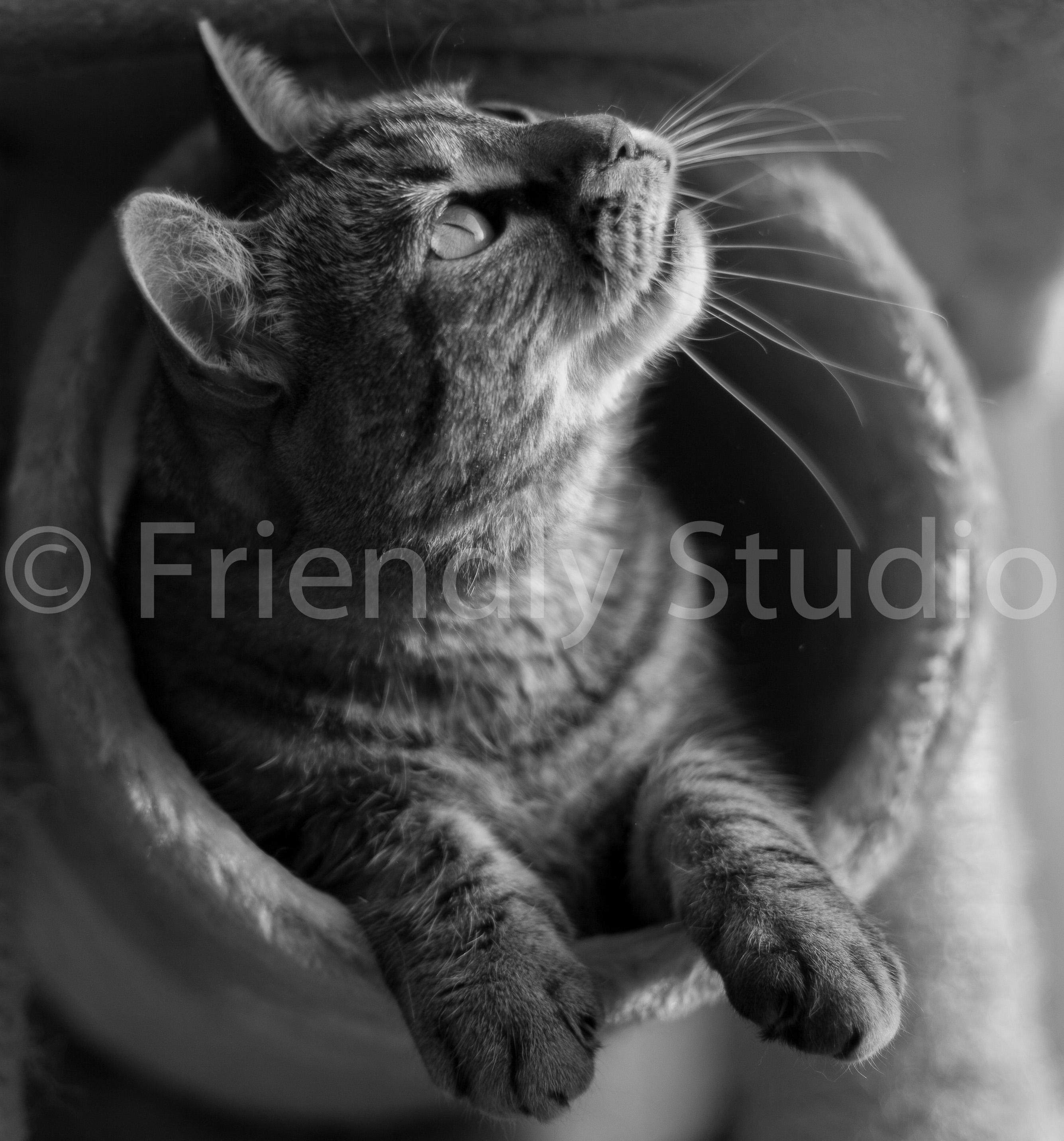 photographe pro chat chaton