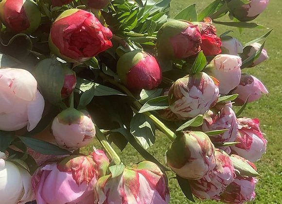 British Peony Bunches Collection only