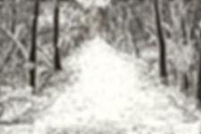 Bog Trail ScraperBoard.jpg