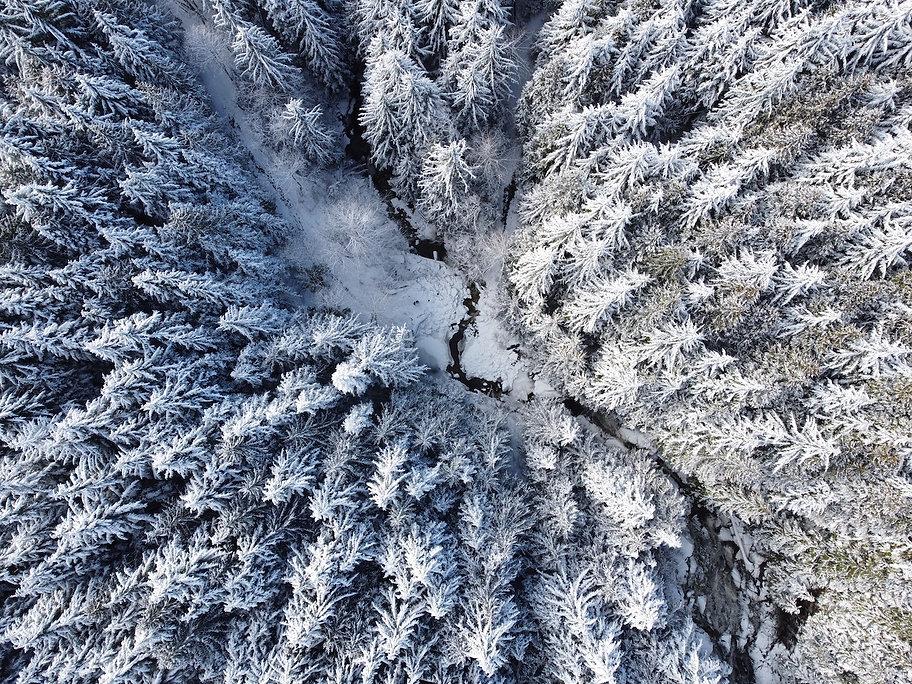 Brand snowy woods 2.JPG