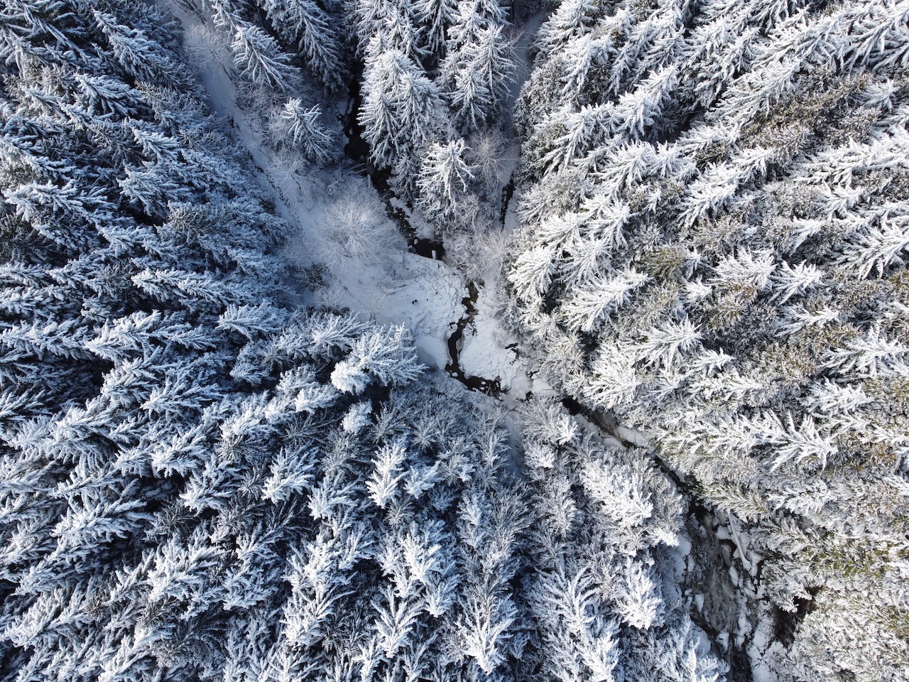 Brand snowy woods.JPG