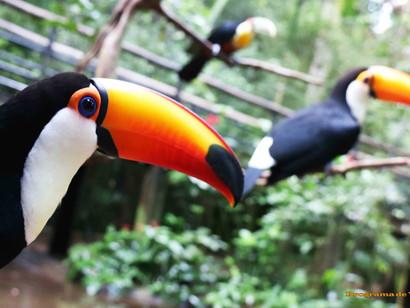 Parque das Aves, em Foz do Iguaçu, bate recorde de visitação em 2019