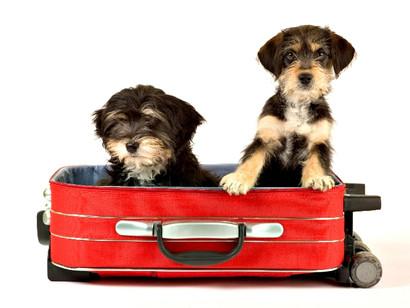 Viaje com seu Pet