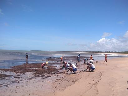 CE, RN, PE, SE, PB, MA, PI, PA e AP estão com as praias limpas, afirma nota