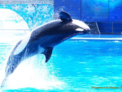 SeaWorld encerrará shows com Orcas