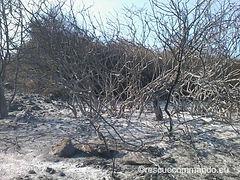Πυρκαγιά στο Δήμο Πρέβεζας