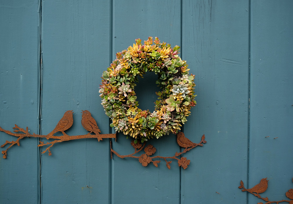 Succulent wreath on blue wall