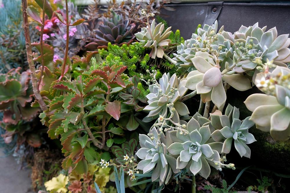 Bright succulent plant basket