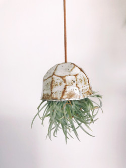 Faceted air plant holders