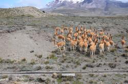Equateur dream-alps