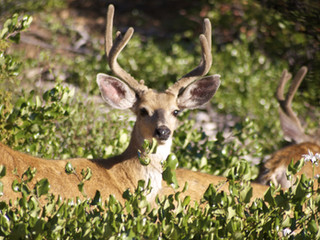 Deer lawsuit battled out in B.C. Supreme Court