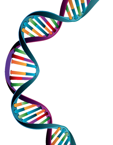 DNA-Strand.png