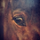Thumbnail: Large Beautiful Oil on Canvas of a Horse Portrait by Hans Christian Caspersen
