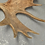 Thumbnail: Large And Impressive Elk Antlers With 31 Points