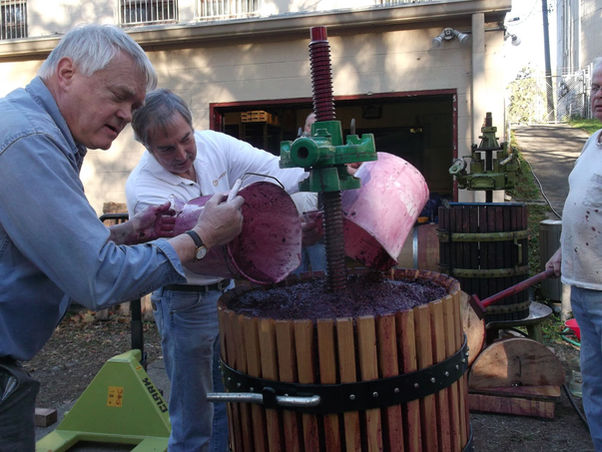 Fermented grapes from bins dumped into wooden hydraulic press