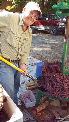 Wine making steps from grape to fermented juice.