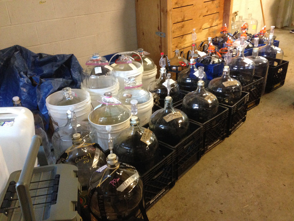 Member carboys waiting to be filled