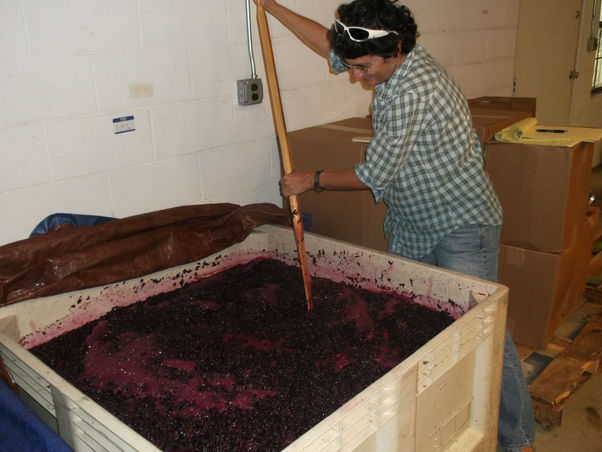 Grapes are stirred everyday for the next 7-10 days