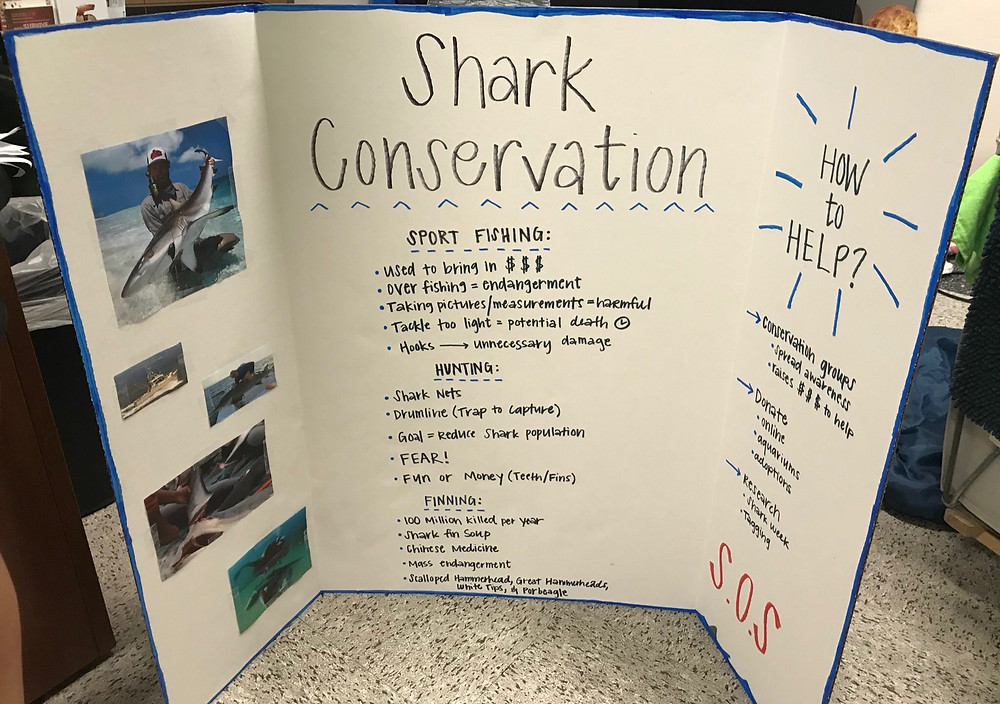 Below is a picture of a Shark conservation my group made