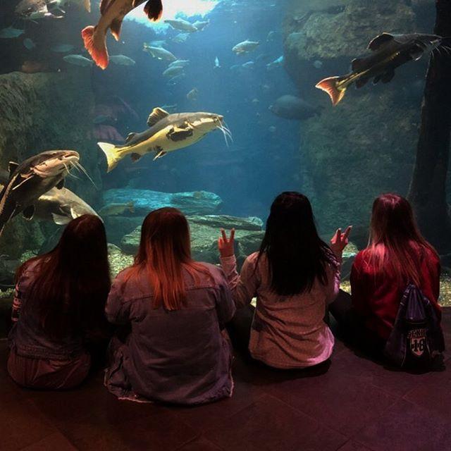 My friends and I at the Dallas World Aquarium