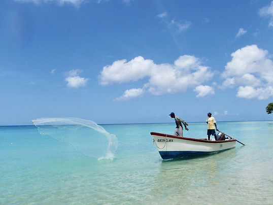 Casting a net fo bait fish in Barbados.