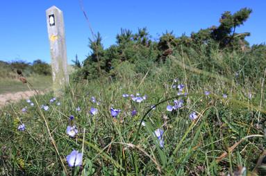 The Norfolk Coast path, Old Hunstanton