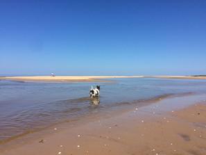 COMP Perce sea trotting.JPG