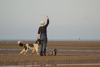 Dogs' beach paradise