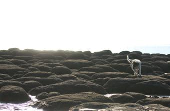 COMP Perc on beach boulders.JPG