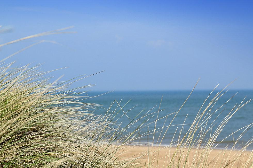 Dunes grass.jpg