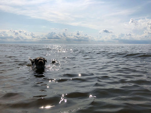 COMP Perce swimming silhouette.jpeg