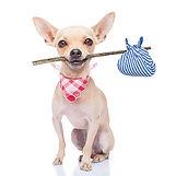 bigstock-Lost-Dog-73302982-1024x1024.jpg