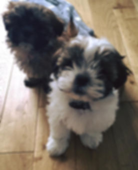 Winston and Ruby - Puppy Visits - A4 Paws