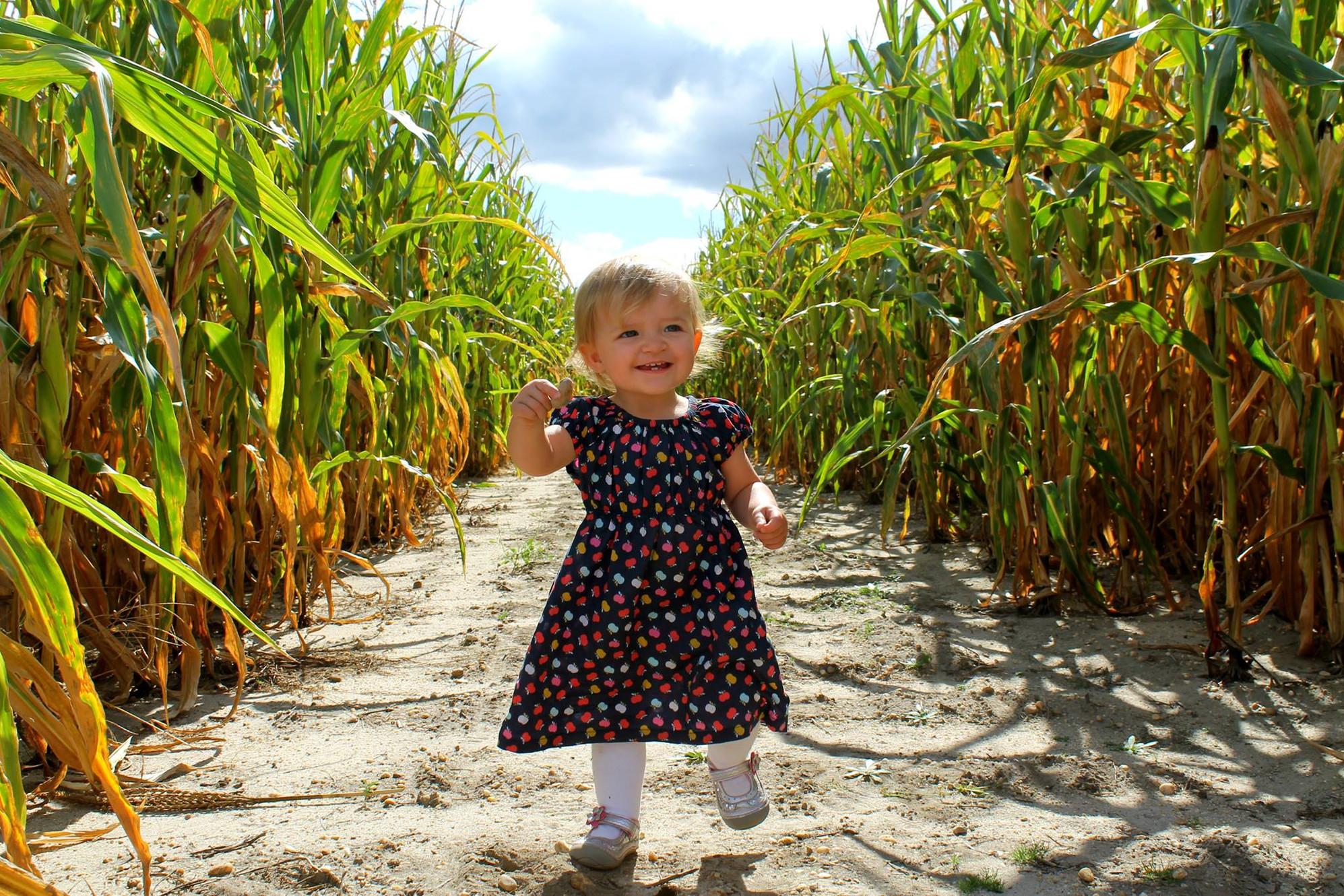 Corn Maze Pumpkin Patch Galloway Twp Nj Sahl S Father Son Farm