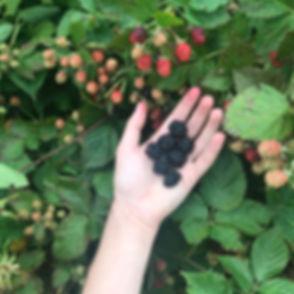 blackberries-hand.jpg
