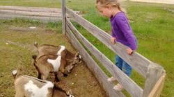 Naomi&goats
