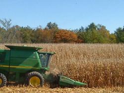 combine corn