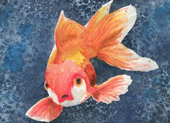 Fantail Goldfish, 6x9